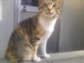 近所の野良猫に遊んでもらう昼下がり