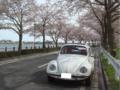 今日は天気が良かったので、グローリーで近所の桜のトンネルをちょこ