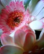 おはようございます♪ 昨日は旦那様のお誕生日(^-^) お花をもらって帰