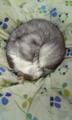 マジ寒い{{(>_<;)}}猫も寒さに弱い!