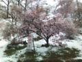 弘法山は桜まつりどころではなかった
