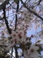 花見!桜まだ咲いてた!そして春とは思えん寒さ