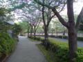 朝の散歩なう  & 100ツィート 達成