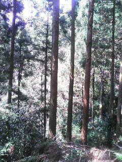 芋峠の道中です。小休止中。小鳥のさえずり、風の音だけでとても静か