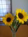 今週の花は♪夏を先取り♪ヒマワリ