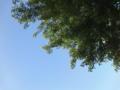 今日の千葉は、雲ひとつないピーカン。サニー千葉だ((爆))
