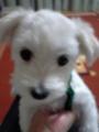 @dateglassアイコンは子犬です