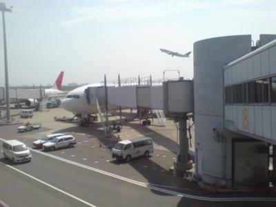 飛行機見えて興奮