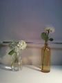 やっぱり部屋に花があるといいなー。左の紫陽花はもう枯れてきてるけ