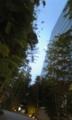月と竹林がきれい。