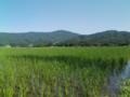 真っ青な空の境目にくっきりと映える緑の稜線。ふわっとした田畑の匂