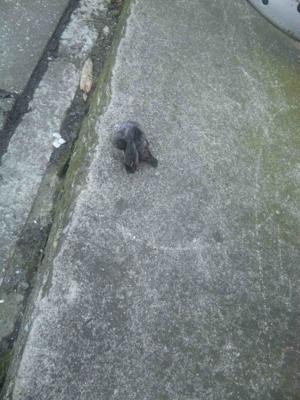 隣ね家にある巣から落ちたであろうツバメの雛ちゃん。通行人の手によ