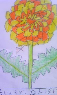 小2のムスメが観察で描いたタンポポ。花びらの細かさと色使いに驚い