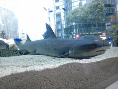 銀座ソニンビルでサメはっけそ!
