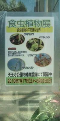 植物園きてみた。図鑑でしか見たことなかった食虫植物。ハエトリソウ