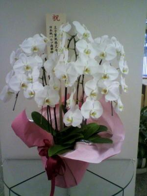 創刊10周年のお祝いに頂きました。めったに頂かないゴージャスな花!!