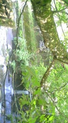 滋賀の山奥にある旅館に到着!旅館の前には川が流れてます。河原は緑