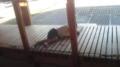 朝起きたら息子が行方不明。探したらキャットウォークで寝てるやん。