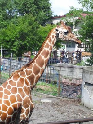 にーとだから旭山動物園に来てみました(´・ω・`)