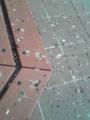 つくば市まちかど観察。ムクドリの糞害@つくばセンター。あ る意味