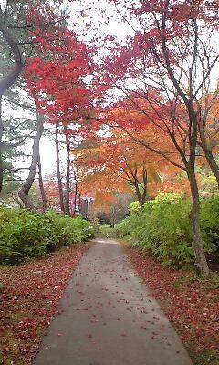 秋保で紅葉ガリ