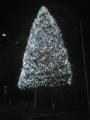 ホテルオークラのクリスマスツリー