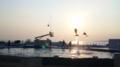 イルカショウを見ました。夕日に向かって跳んでる。