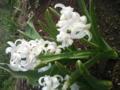 春はいいね。何げない散歩でも花がいっぱい。