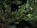 夜桜。…美しさが伝わらーん!…あぁ、今年満開の桜を一度にたくさん