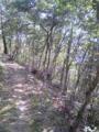二週間前の桜の季節から、新緑の季節へ。室山トレラン中。