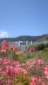 風の丘から宮ヶ瀬ダムを望む。