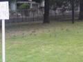 なんかわかりずらいけど鳥がたくさん何かに群がっているのだ