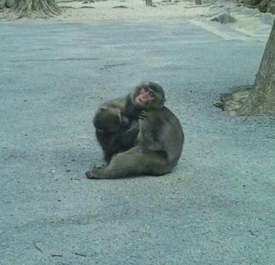 高崎山で猿とふれあい中。間近に見れるんですね(`・ω・´)近いぉ