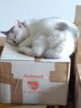犬箱の上で眠る猫wwwある意味笑えない…orz