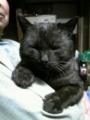 マイペット 我が家族の猫ちゃんです。