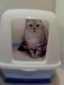 トイレちう ねこ