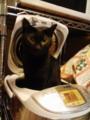 これって投稿してただろうか。IHで炊かれたがる黒猫さん。