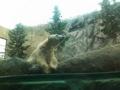 旭山動物園なう。平日なので空いてる〜