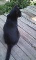 そうだ。インターン先にいた猫を紹介します。和んでください。