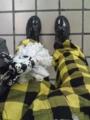 流石ブーツ暑いなー・・・しかし足袋にしてきて良かった(*^q^*)いくら