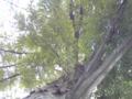 芝生の上に寝っ転がりながらパチリ。この木の根本におります