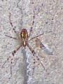 初めてみる蜘蛛さんだ