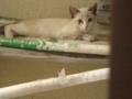 うちのアパートの軒下に、額にMの紋章をもつ猫がすみつい てるんだけ