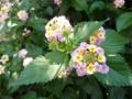 道ばたに咲く花に心癒される月曜の朝。