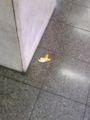 みかんの皮がコンコースに落ちていた和歌山駅。謎過ぎるぞおい。