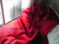 ベッドの真っ赤の毛布に陽が当たっている様が、やたらに気持ちを平和