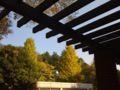 東京メトロの屋根にも秋の気配 ずいぶん黄色くなってるよ。神宮外苑