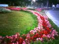 鶴舞公園100周年。地元の小中学生が植えたんだって。ベゴニアの周りに