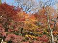 大井平公園です。茶臼山のだいぶ近くなので愛知県でも流石に紅葉して