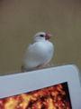 小真ちんがiMacの上で餅化 …iTunesのビジュアライザをフルスクリーンに